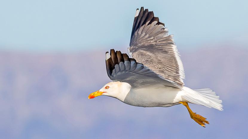 Tour d'observation des oiseaux, Observation des oiseaux aux Açores, Portugal © Pete Morris