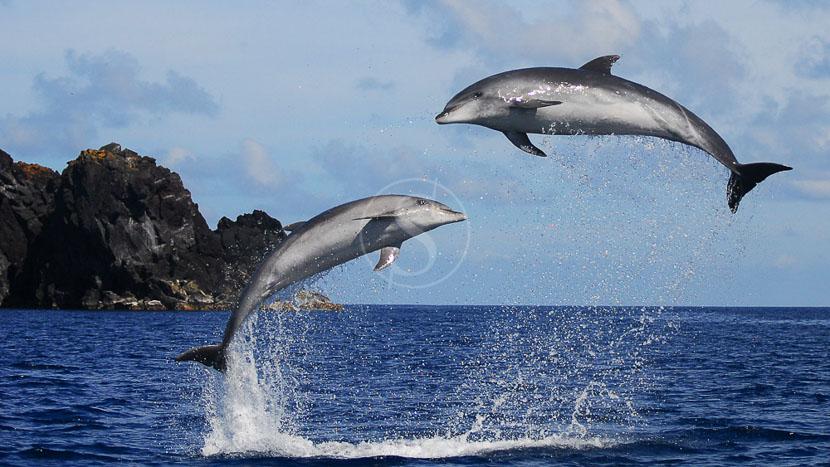 Baleines, balades et biodiversité, Ambiance des Açores