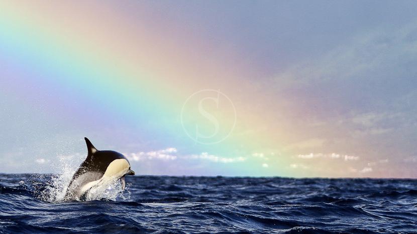 Le monde des baleines avec Yves Paccalet, Ambiance des Açores