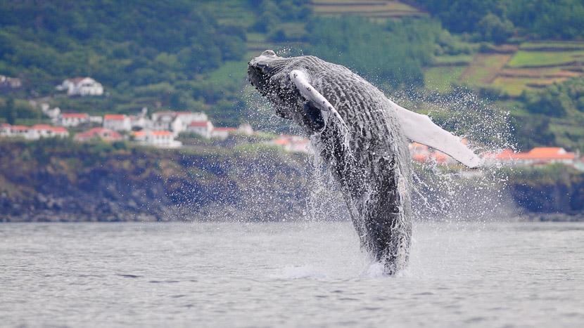 Whale watching à Pico, Ambiance des Açores