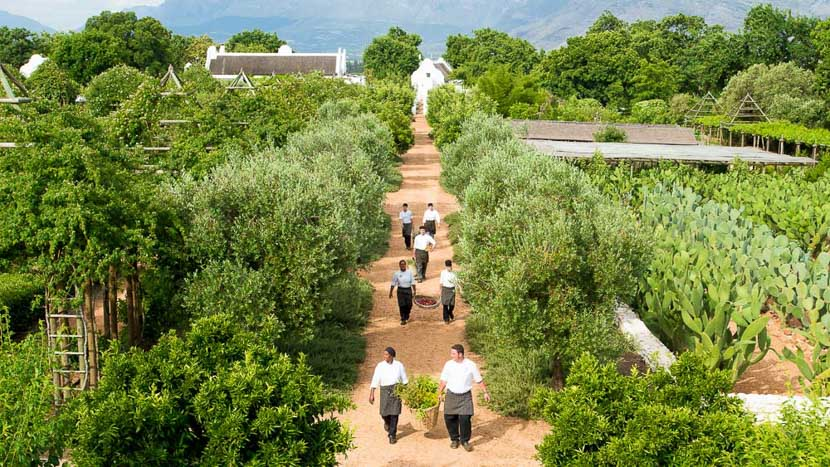 Déjeuner et dégustation de vins à Babylonstoren, Babylonstoren Farm Hotel, Afrique du Sud
