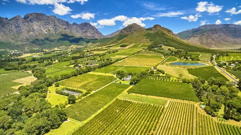 Dégustation de vins à Constantia, Région de Franschhoek, Afrique du sud