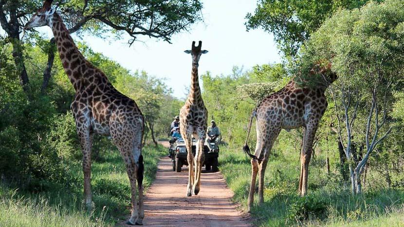 Réserve privée de Kapama, Kapama Buffalo Camp, Afrique du Sud