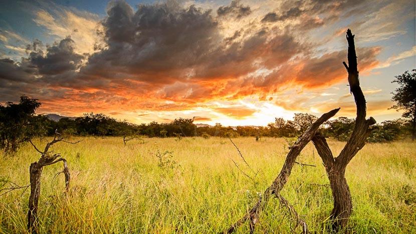 Réserve privée de Karongwe, Chisomo Safari Camp, Afrique du Sud