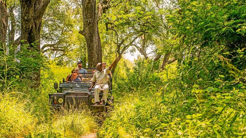 Réserve privée de Karongwe, Karongwe River Lodge, Afrique du Sud