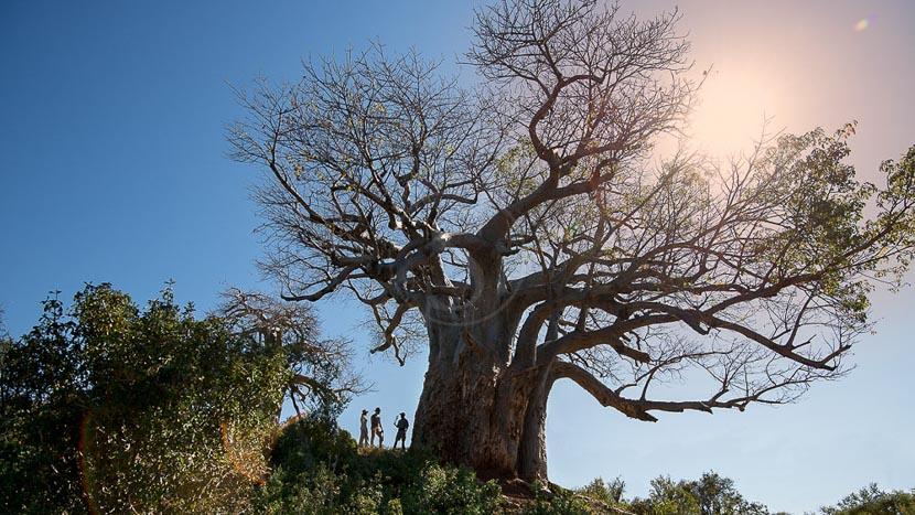 Parc national Kruger, Pafuri Walking Trails, Afrique du Sud