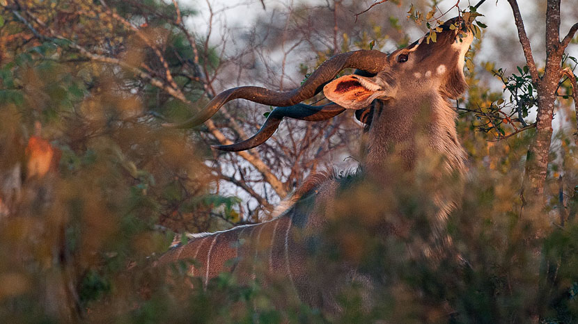 Safari en ULM au dessus du Kruger, Safari en Afrique du Sud © Alain Pons