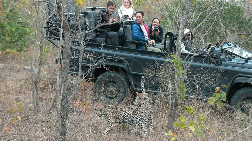 Safari en 4x4 dans le Greater Kruger, Safari en Afrique du Sud © Alain Pons