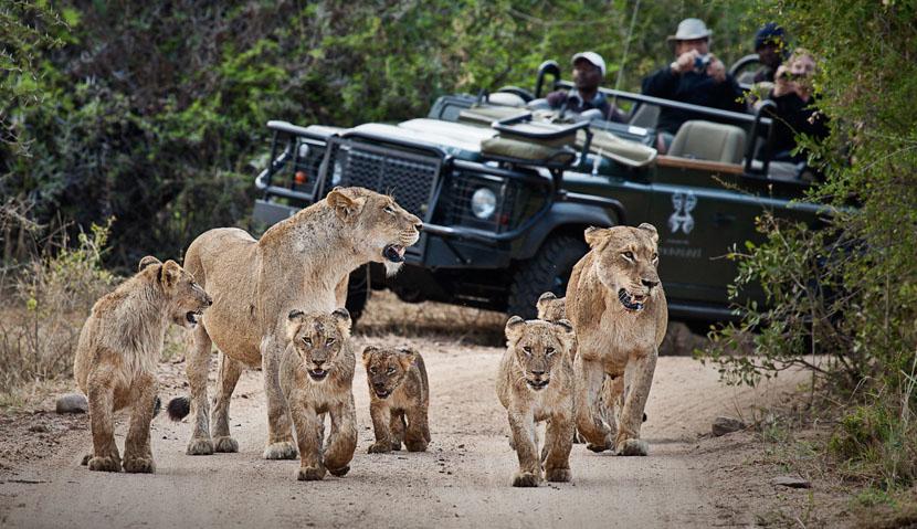 Safari en 4x4 dans le Greater Kruger,