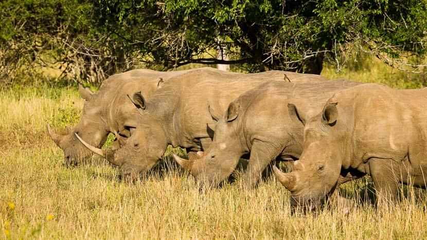 Kwazulu-Natal, Rhino Ridge Safari Lodge, Afrique du Sud © Isibindi - Roger de la Harpe