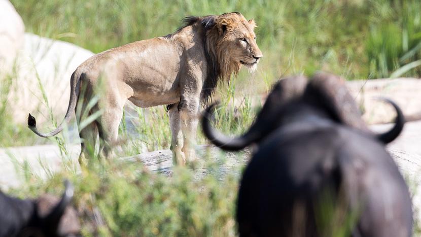 Kwazulu-Natal, Kirkman's Kamp, Afrique du Sud © &Beyond