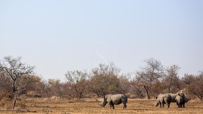 Kwazulu-Natal, Africa on foot , Klaserie Private Game Reserve, Afrique du Sud