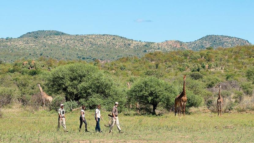 Réserve animalière privée de Madikwe, Madikwe Safari Lodge, Afrique du Sud © More