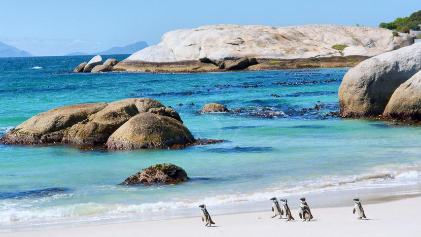 Manchots du Cap à Boulders Beach, Cape Town, Afrique du Sud