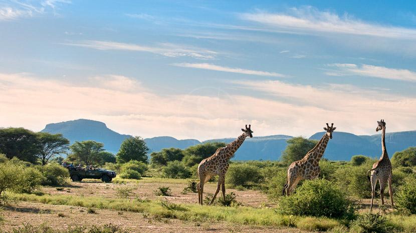 Parc national de Marakele, Marataba Safari Lodge, Afrique du Sud © More