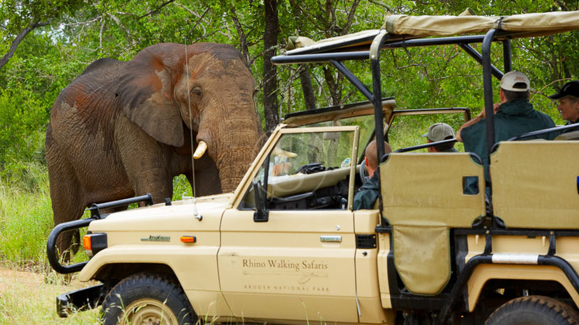Mpumalanga, Rhino Post Safari Lodge, Parc Kruger