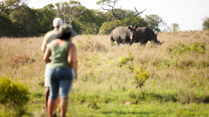 Conservation du rhinocéros à Phinda, Phinda Game Reserve © &Beyond