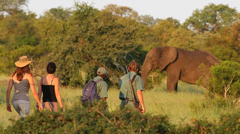 Les réserves privées du Kruger, Rhino Plains Camp, Parc Kruger