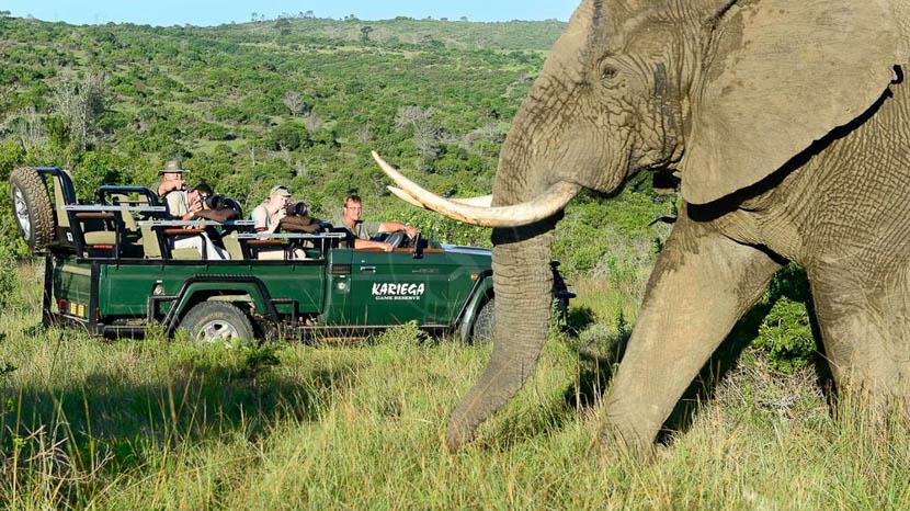 Les réserves privées du Kruger, Kariega River Lodge, Afrique du Sud