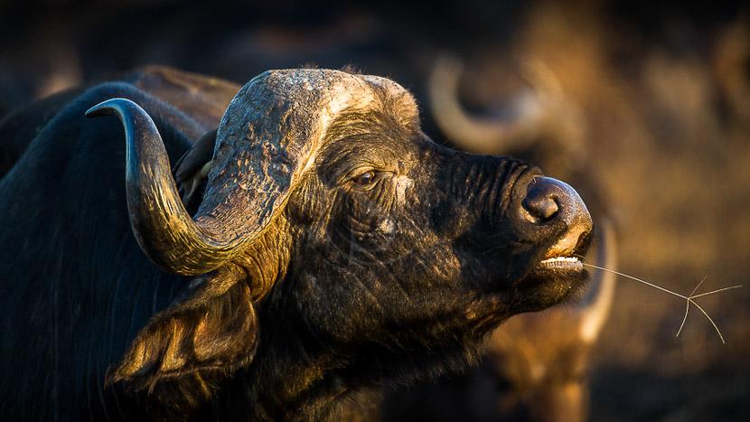 Les réserves privées du Kruger, Safari à Mala Mala, Afrique du Sud © C. Courteau