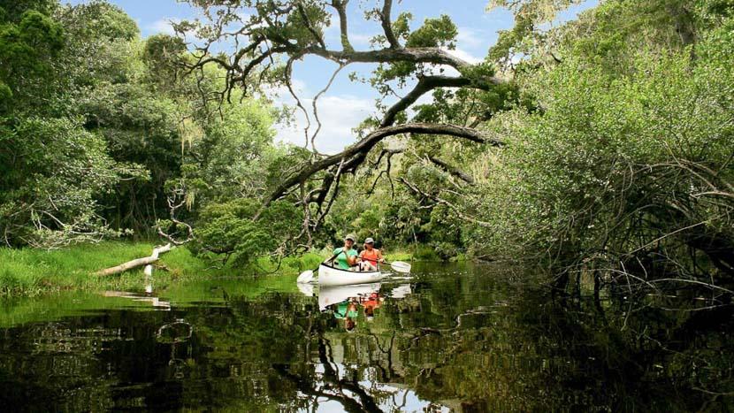 Safari dans le fynbos, Pezula, route des jardins, Afrique du Sud