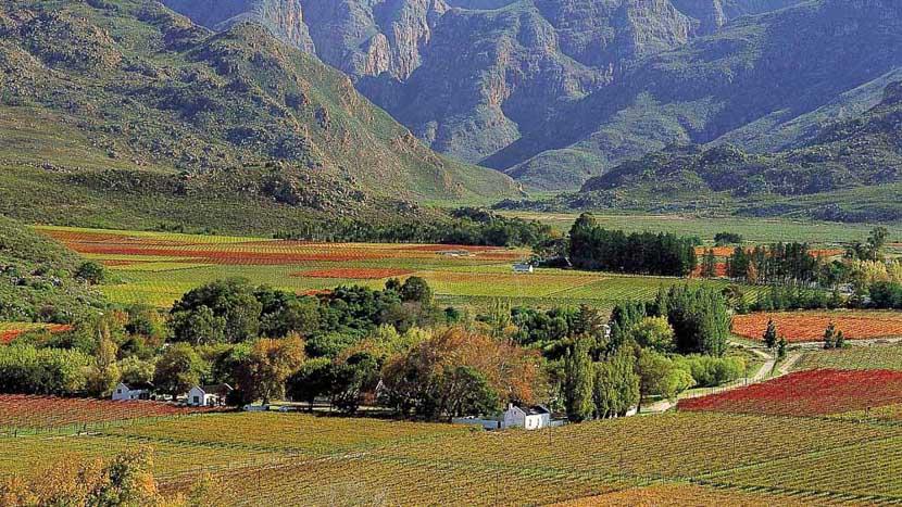 La route des vins au départ de Cape Town, Route des vins, Afrique du sud