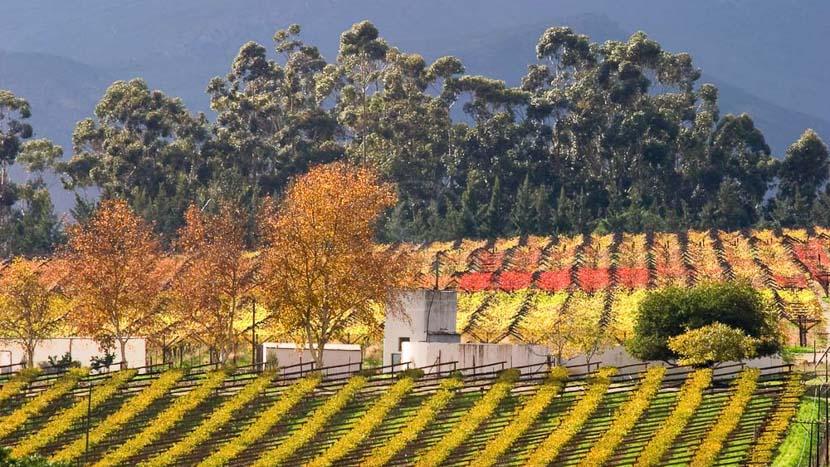 Tour privé sur la route des vins, Route des vins, Afrique du sud