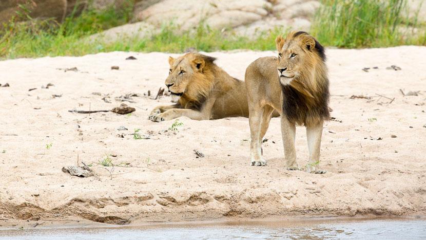 Réserve privée de Sabi Sand, Kirkman's Kamp, Afrique du Sud © &Beyond