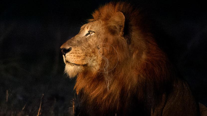 Réserve privée de Thornybush, Safari en Afrique du Sud © Alain Pons