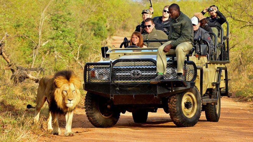 Réserve privée de Thornybush, Kapama River Lodge, Afrique du Sud