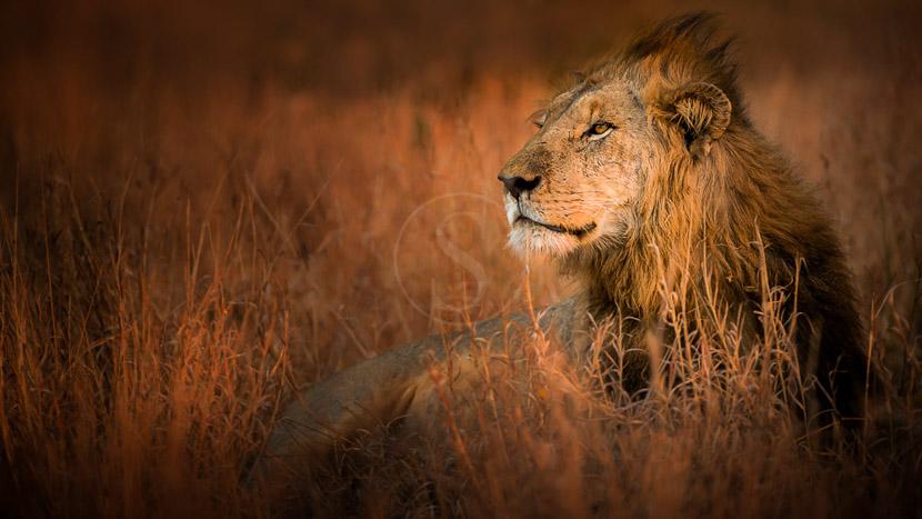 Réserve privée de Thornybush, Singita Lebombo, Afrique du Sud © Singita