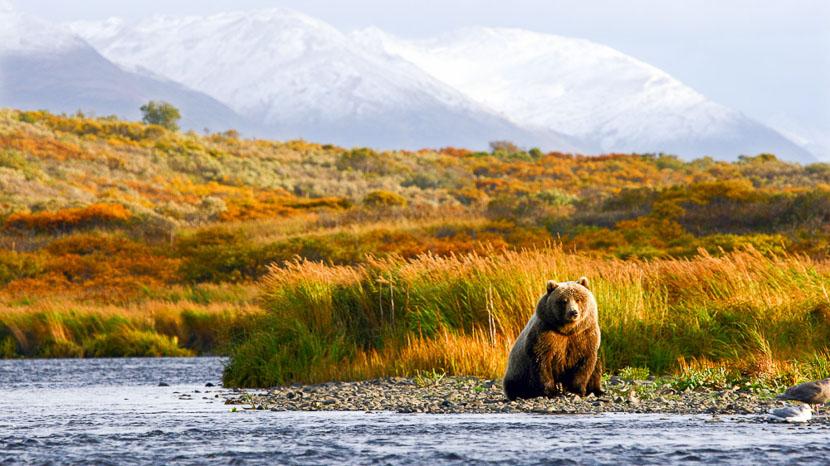 Kodiak Island et sa réserve naturelle protégée, Ours à Kodiak, Alaska