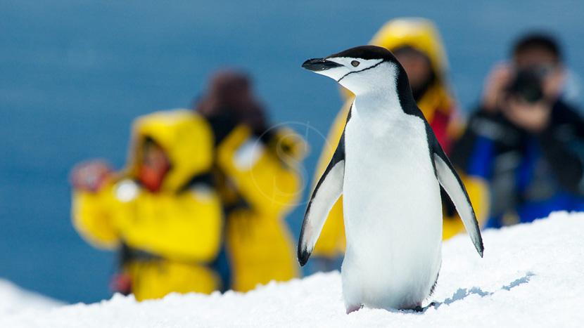 Antarctique Express jusqu'au Cercle Polaire, Croisière en Antarctique © Quark - Lynn Woodworth