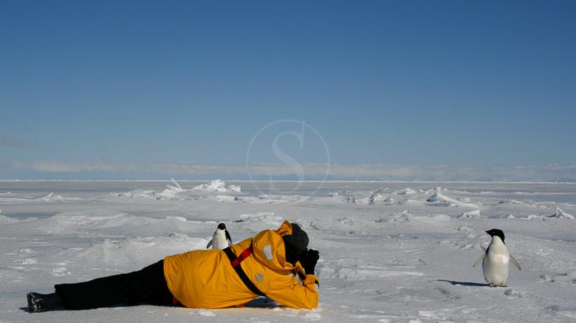 Antarctique Express jusqu'au Cercle Polaire, Rencontre en Antarctique © Quark - David McEown