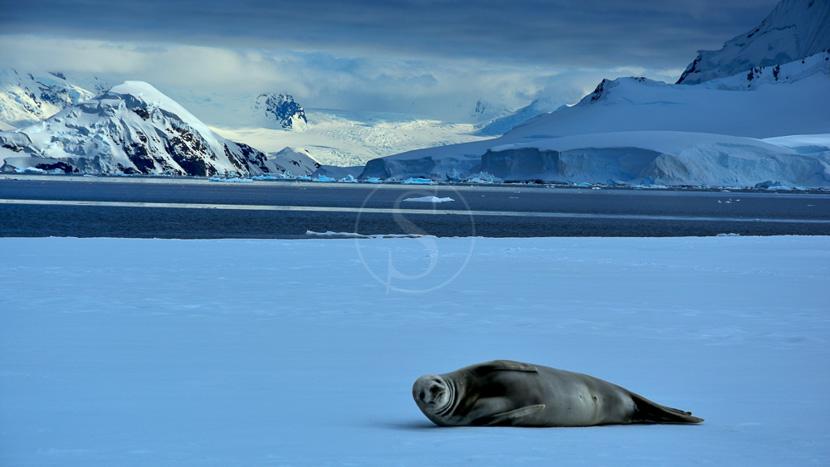 Éclipse solaire totale en Antarctique, Wilhemina Bay, Antarctique © Shutterstock