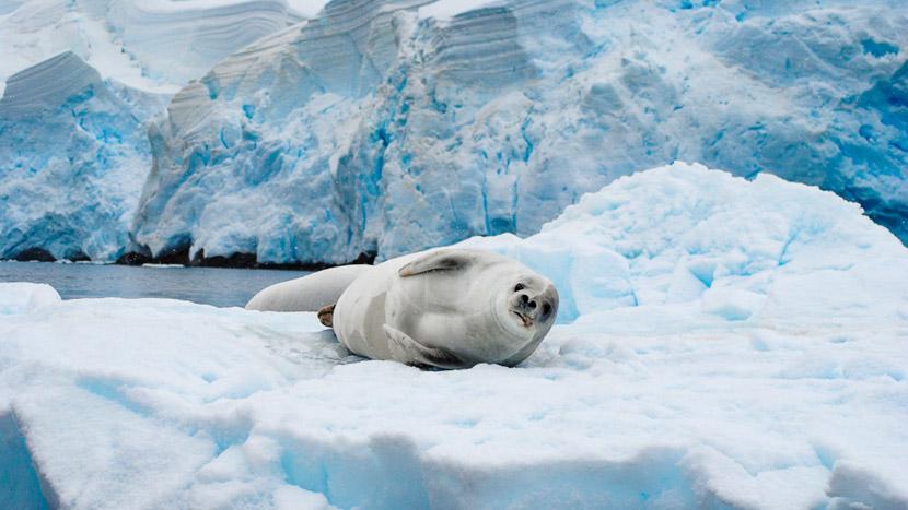 Croisière d'expédition, îles Falkland, Géorgie du sud et Antarctique jusqu'au cercle polaire , Croisière en Antarctique © Oceanwide  Jamie_Scherbeijn