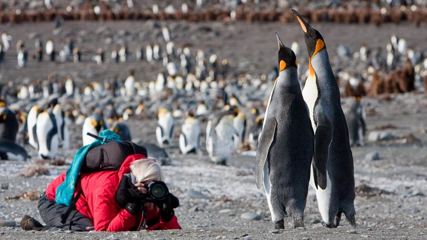 Croisière d'expédition, îles Falkland, Géorgie du sud et Antarctique jusqu'au cercle polaire , Georgie du Sud © Oceanwide Jan Veen
