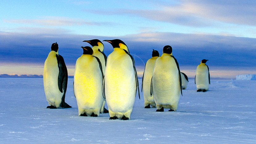 Faune de l'Antarctique, Croisière en Mer de Weddell, Antarctique © Oceanwide Kubny Heiner