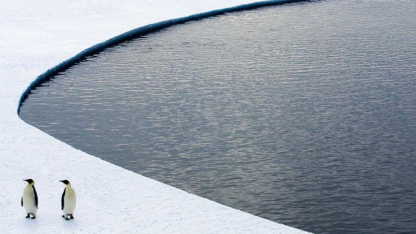 Croisière en Antarctique et île Shetland du Sud, Manchots empereurs © Quark - John Weller