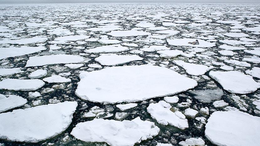 Croisière en Antarctique et île Shetland du Sud, Croisière en Antarctique © Quark - John Weller