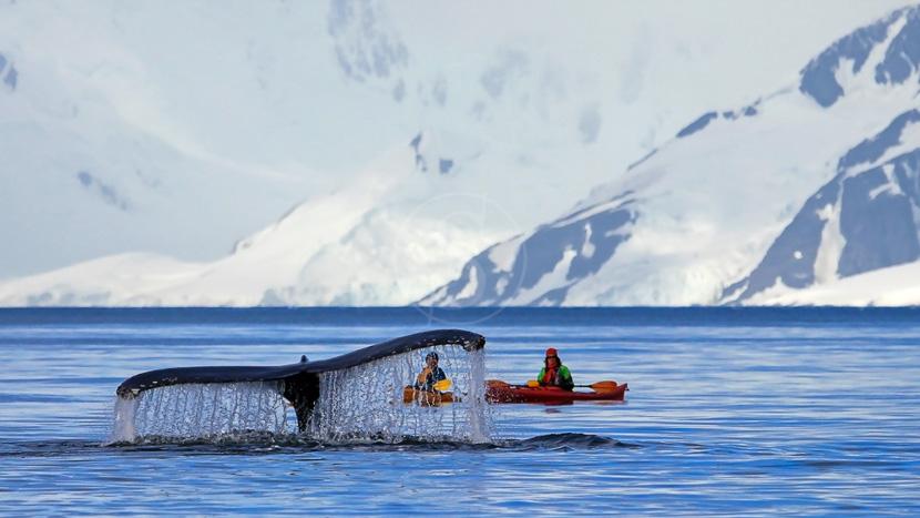 Sorties en kayak avec un guide naturaliste, Péninsule, Antarctique © Shutterstock