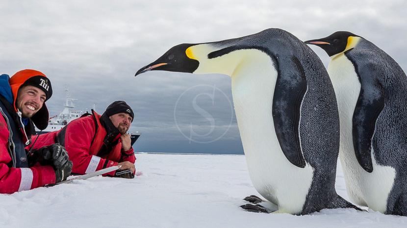 Expédition en Antarctique, à la recherche du manchot empereur, Mer de Ross, Antarctique © Oceanwide