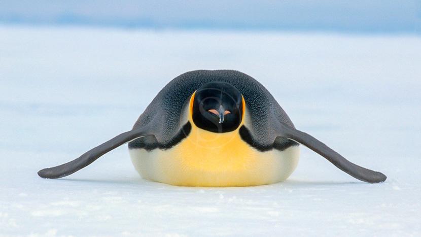 Expédition en Antarctique, à la recherche du manchot empereur, Croisière en Mer de Weddell, Antarctique © Oceanwide Kubny Heiner