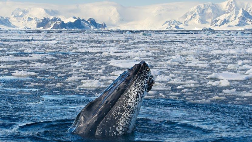 Au-delà du cercle polaire , Péninsule, Antarctique © Shutterstock