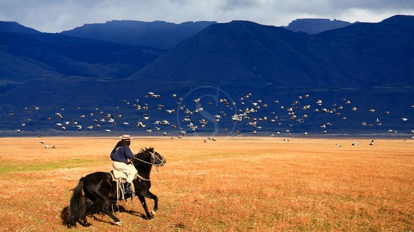 Déserts et montagnes du Nord Ouest argentin, Gaucho, en Argentine