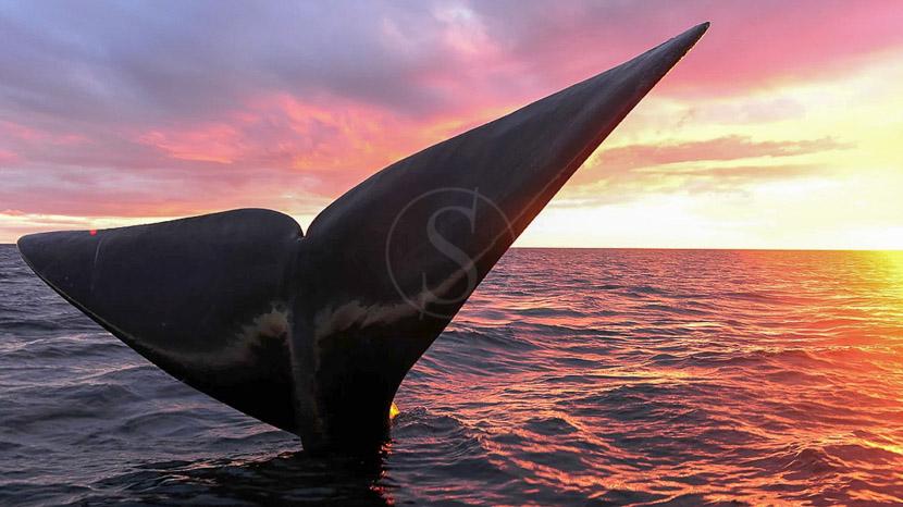 La faune sauvage de la péninsule Valdés, Estancia La Ernestina, Argentine © La Ernestina
