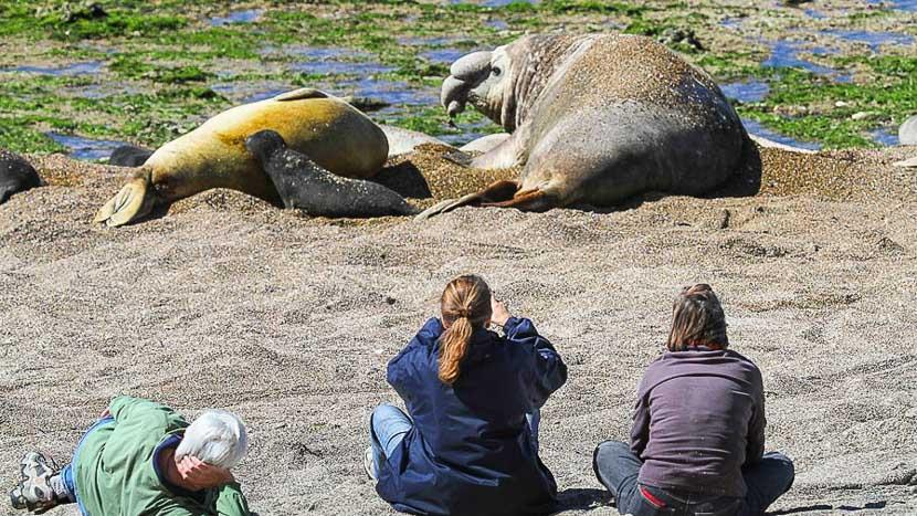 La faune sauvage de la péninsule Valdés, Estancia Rincon Chico, Argentine © Estancia Rincon Chico