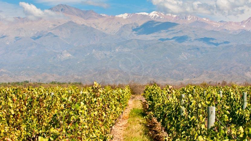 Argentine, des cuvées d'exception, Région de Mendoza, Argentine