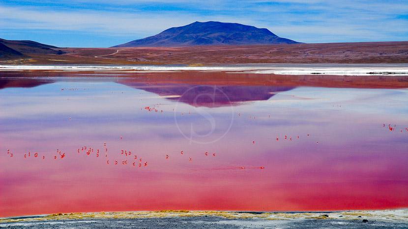 Atacama et Uyuni, déserts et salars signés Explora, Laguna Colorada, Bolivie © Alain Pons