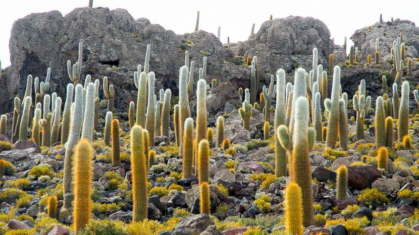 Atacama et Uyuni, déserts et salars signés Explora, Salar d'Uyuni, Bolivie © Alain Pons